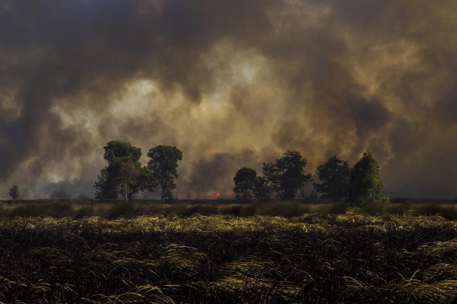 Asap Hitam Selimuti Kebakaran Hutan dan Lahan di Kalsel-2