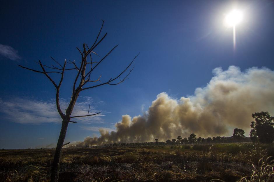 Asap Hitam Selimuti Kebakaran Hutan dan Lahan di Kalsel-1