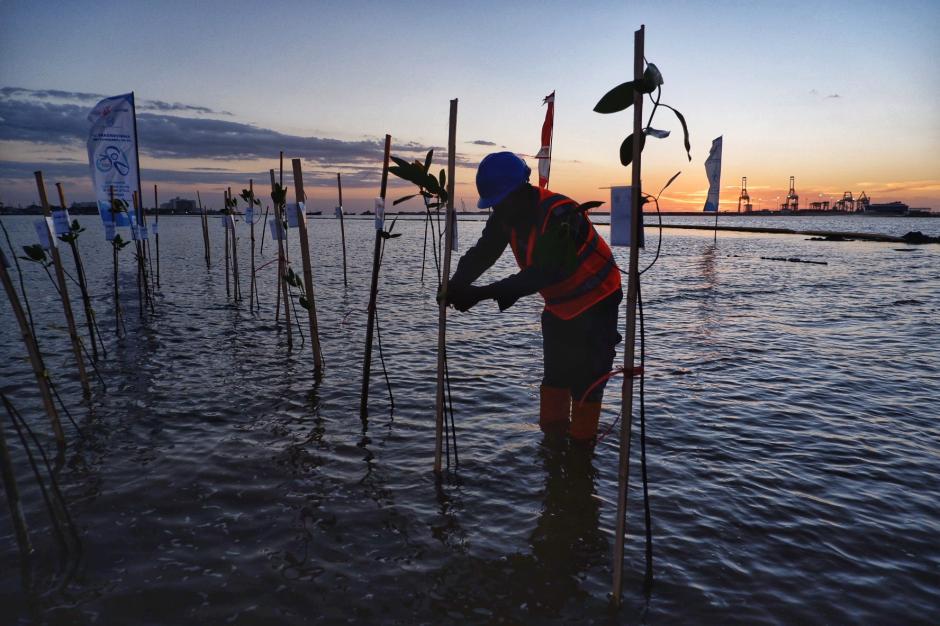 Penanaman Mangrove di Makassar New Port-3