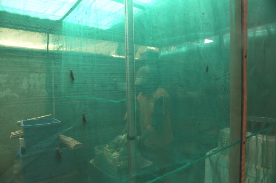 Melihat Rumah Budidaya Ulat Maggot di Kelurahan Kuningan Barat-4