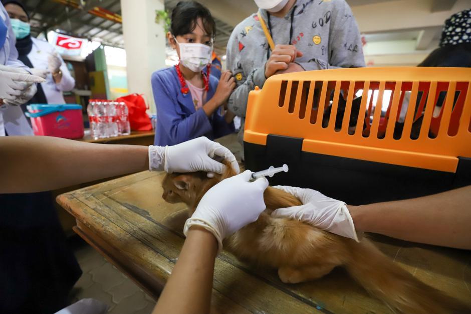Vaksin Rabies Gratis di Jakarta-1