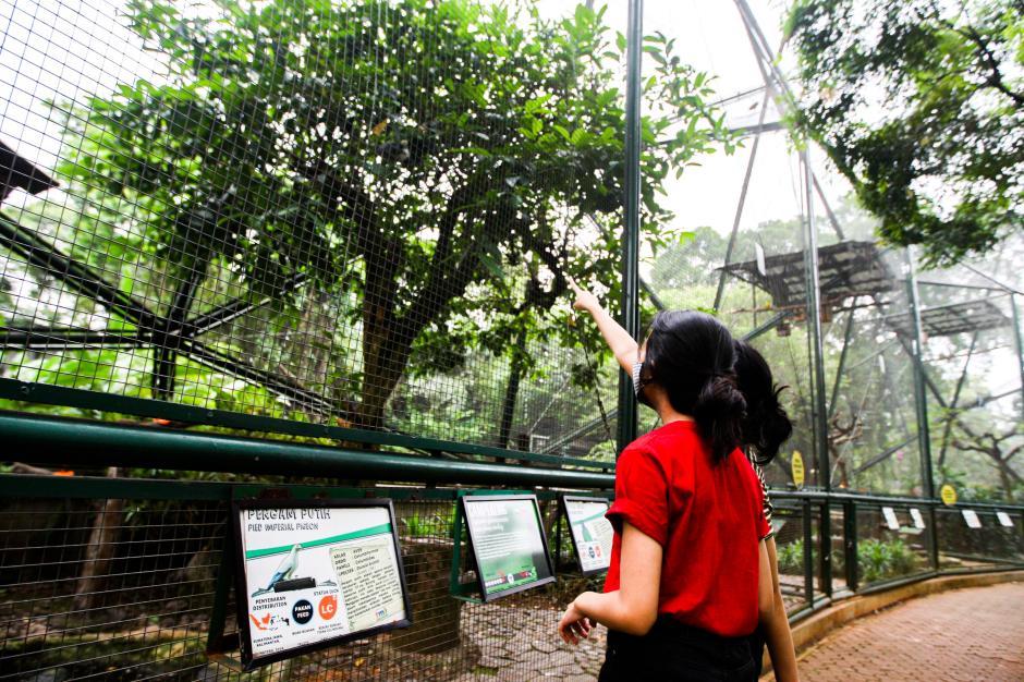 Wahana Taman Burung TMII Mulai Dibuka Untuk Rekreasi-0