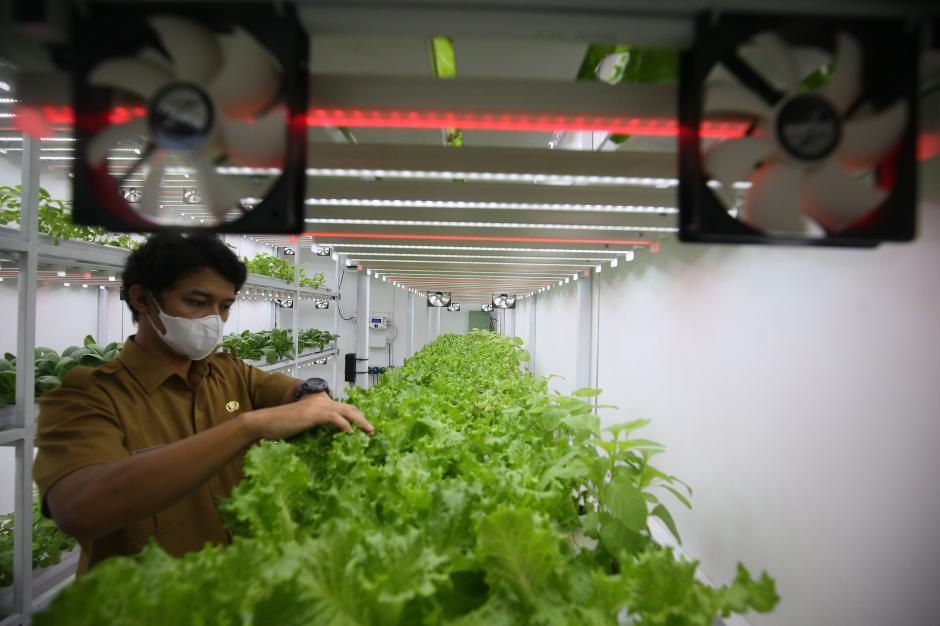 Bertanam Hidroponik di Container Farming-1