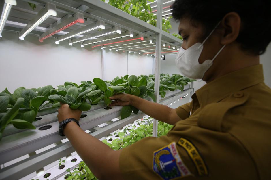 Bertanam Hidroponik di Container Farming-2